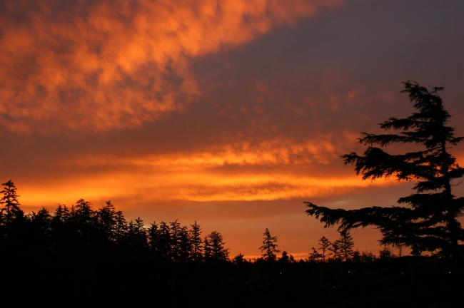 This wasn't the sky this morning but one Warren and I saw in Ucluelet a few years ago.